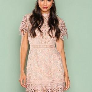 True Decadence Short Sleeve Lace Dreamy Dress Kotelomekko Gold